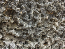 Coral Rock Background Stock Photography