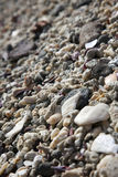 Coral Rock Beach. Millions of pieces of coral rock span across the beach Royalty Free Stock Image