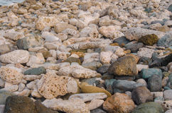 Coral and Rock Beach Close Up Royalty Free Stock Images