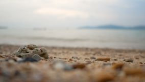 Coral and rock on the sand beach with sea wave select focus shallow depth of field with summer evening atmosphere. 4K Coral and rock on the sand beach with sea stock video
