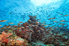 Coral rocks and fishes wall underwater landscape panorama Stock Photo