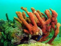 Coral rojo de la esponja imagen de archivo