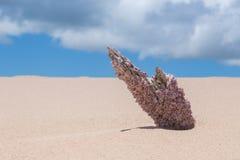 Coral rosado Fotografía de archivo libre de regalías
