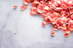coral rose petals on marble, color of the year - flower backgrounds and holidays concept royalty free stock photography