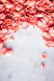 coral rose petals on marble, color of the year - flower backgrounds and holidays concept stock photography