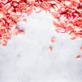 Coral rose petals on marble, color of the year - flower backgrounds and holidays concept. Coral rose petals on marble, color of the year - flower backgrounds and royalty free stock photography