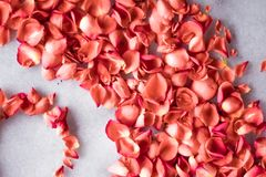coral rose petals on marble, color of the year - flower backgrounds and holidays concept stock images