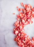 coral rose petals on marble, color of the year - flower backgrounds and holidays concept royalty free stock image
