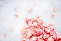 coral rose petals on marble, color of the year - flower backgrounds, holidays and floral art concept royalty free stock images