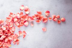 coral rose petals on marble, color of the year - flower backgrounds, holidays and floral art concept stock image