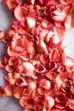 coral rose petals on marble, color of the year - flower backgrounds and holidays concept royalty free stock photos