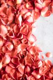 coral rose petals on marble, color of the year - flower backgrounds and holidays concept royalty free stock images