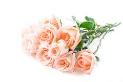 Coral rose Stock Photos