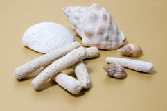 Coral Rubble and Shells on light brown. Coral Rubble formed from old dead coral that is washed up onto the beach with some shells on light brown background Stock Photography