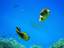 coral ryb zdjęcia royalty free