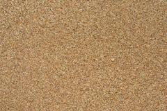 Coral Sand Images libres de droits