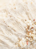 Coral and sand background Royalty Free Stock Image
