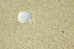 Coral on the sand Royalty Free Stock Photo