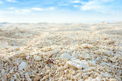 Coral sand Royalty Free Stock Photo