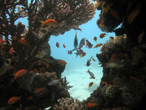 Coral Scene. A beautiful picture of a coral reef teeming with life and bubbles in the background. shot in the Red Sea stock photos