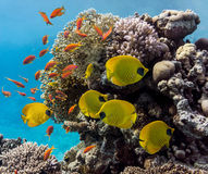 Coral scene - panorama Stock Photo