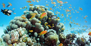 Coral scene - panorama Royalty Free Stock Photography