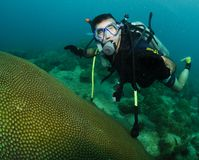 Coral and scuba diver. Male scuba diver swimming over coral reef Royalty Free Stock Photo