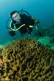 Coral and scuba diver. Male scuba diver swimming over coral reef Royalty Free Stock Photos