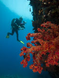Coral and scuba-diver Stock Photo