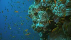 Coral Sea banque de vidéos