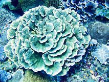 Coral Sea, Bali, Indonesia. One Coral Sea, Bali, Indonesia Royalty Free Stock Images
