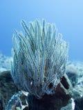 Coral Sea, Bali, Indonesia. One Coral Sea, Bali, Indonesia Royalty Free Stock Image