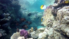 Coral, Sea, Coral reef. stock video footage