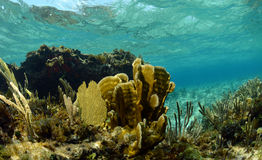 Coral and sea fans in underwater landscape Royalty Free Stock Photo