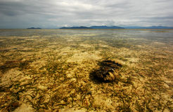 Coral Sea panorama with Giant Clam Stock Image