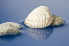 Coral and sea shell Royalty Free Stock Photos