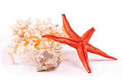 Coral, sea-star and seashell Stock Photography