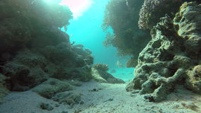 Coral, Sea, Tropical fish. Coral reef. Exotic fishes. The beauty of the underwater world. Life in the ocean. Diving on a tropical reef. Submarine life. Clear stock video footage