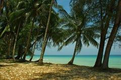 Coral Sea Tropical Wild Beach-Sand-Palme-Himmel-Landschaft lizenzfreie stockbilder