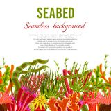 Coral Seabed Background. Seabed background with corals and seaweed seamless border vector illustration Royalty Free Stock Photos