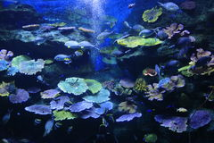 Coral seabed. Siam Ocean World Enormous animal thailand aquarium coral seabed stock image