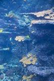 Coral Sealife Lizenzfreies Stockfoto