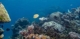 Coral Seascape photo libre de droits
