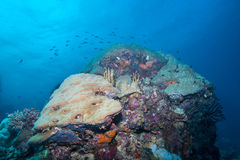 Coral Seascape Stock Photo