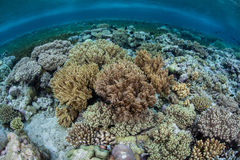 Coral Seascape in Indonesia Royalty Free Stock Image
