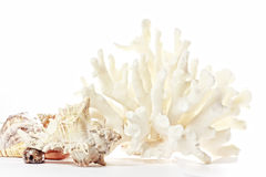 Coral and seashells Stock Images