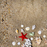 Coral, seashells and starfish Stock Photography
