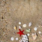 Coral, seashells and starfish Stock Photography