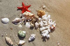 Coral, seashells and starfish Stock Images