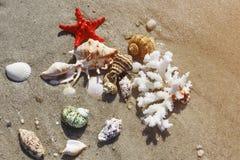 Coral, seashells and starfish Stock Images